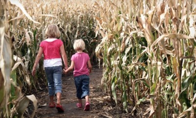 Cobb's Corn Maze & Family Fun Park
