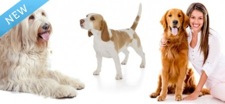 Raising Canine Dog Daycare, Training and Grooming