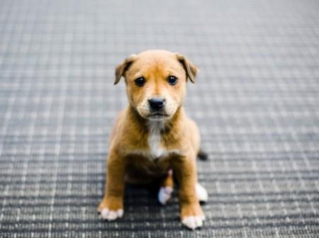Raising Canine
