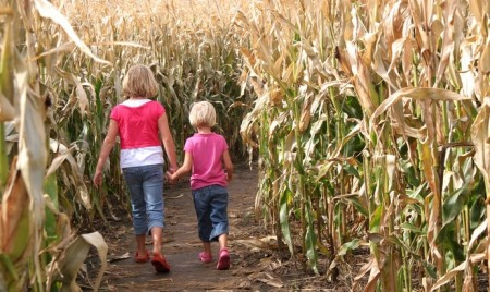 Cobb's Corn Maze & Family Fun Park