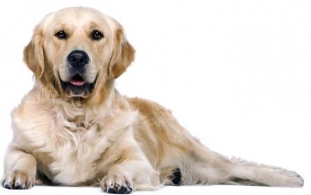 Doggin-It