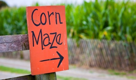Cobb's Corn Maze: $16 for Family Fun Park for Two, $29 for ...